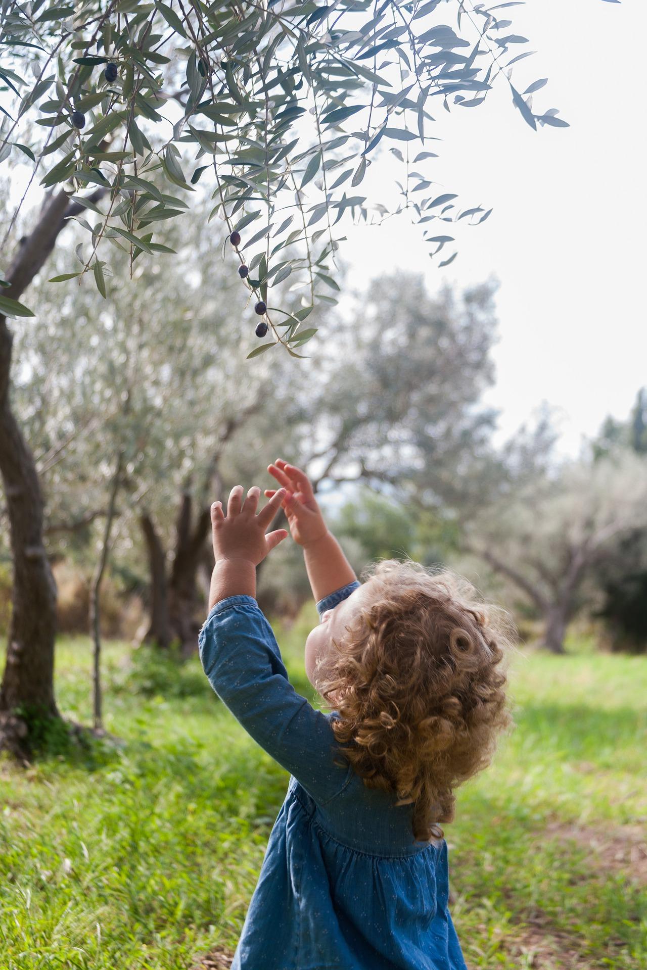 olives-4605423_1920